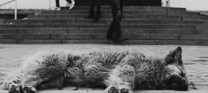 Онтология городского пространства: асфальт, люди и звери